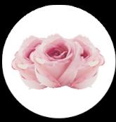 Rosas AGRITRADE